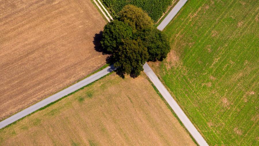 Kreuzungsbaum